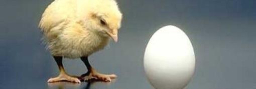 which came first, the chicken or the egg